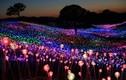 Video: Lễ hội ánh sáng giữa cánh đồng rộng 100.000 m2 ở đảo Jeju