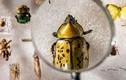 Video: Viễn cảnh thế giới bị diệt vong khi côn trùng biến mất