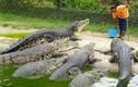 Video: Hiên ngang bón thức ăn cho đàn cá sấu ngoại cỡ