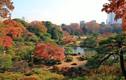 Video: Ngắm mùa thu đẹp hút hồn du khách ở Nhật Bản