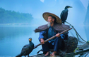 Video: Nghệ thuật câu cá bằng chim cốc trên dòng Li Giang
