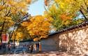 Video: Mùa lá chuyển màu đẹp tựa tiên cảnh ở vùng núi Hàn Quốc