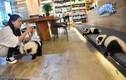 Video: Quán cà phê nhuộm chó thành gấu trúc để thu hút khách