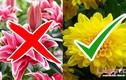 Video: Sai lầm khi cắm hoa trên bàn thờ ngày Tết không thể bỏ qua