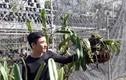 Vườn lan rừng tiền tỷ của kỹ sư tin học bỏ phố về quê