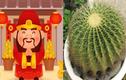 5 loại cây Thần Tài, chiêu tài dẫn lộc, lọc sạch không khí