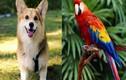 5 con vật nên nuôi trong nhà để hóa giải vận đen, đem lại may mắn