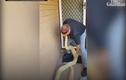 Video: Phát hiện trăn miến điện bạch tạng khổng lồ trong nhà dân