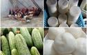 Gia đình 4 người Hà Nội tiêu 1,5 triệu đồng/tháng nhờ thực phẩm vườn nhà
