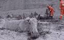 Video: Giải cứu 18 con ngựa mắc kẹt trong vũng bùn