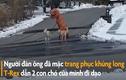 Video:'Khủng long T-Rex' dẫn chó đi dạo lúc phong tỏa