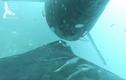 Video: Thước phim hiếm ghi lại cảnh cá voi cho con bú