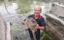 Đàn ba ba trăm con to 'đến phát khiếp' ở Thái Bình