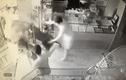 """Video: Trâu """"điên"""" húc người rồi lao vào phá tiệm vàng ở Thái Nguyên"""