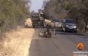 Video:Linh dương tung đòn hiểm đạp thẳng vào mặt sư tử