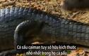 Video:  hung thần Amazon chết thảm bởi gia đình rái cá