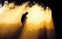 Phật dạy: Giữa cha mẹ và con cái luôn có mối duyên nợ ngàn năm