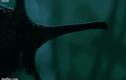 Video: Loài vật từ hành tinh khác cắn xé con mồi thành từng mảnh