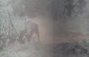 Video: lợn rừng bật dậy quật ngã sư tử để thoát thân và cái kết