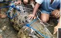 Cá sấu dìm chết thiếu nữ nhưng không thể ăn thịt vì rụng răng