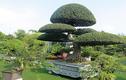 Đại gia Thái Nguyên gây sốt với dàn 'báu vật' giá triệu USD