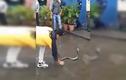 Video: Sững người xem cô gái tay không bắt rắn hổ mang chúa khổng lồ