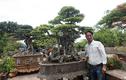 Cây sanh cổ giá 7 tỷ ở Hà Nội khiến dân chơi tò mò