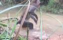 Video: Hai cậu bé lao xuống đầm cứu khỉ con khỏi hàm trăn khủng