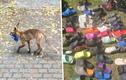 'Thủ phạm' ăn cắp hơn 100 đôi dép khiến dân làng ngỡ ngàng