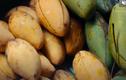 Video: Vì sao nên ăn xoài xanh?