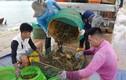 Tôm hùm giảm giá 50%, cá mú ế ẩm nghìn tấn ngao ứ đọng