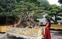 Vợ Toàn đô la - người giấu chồng mang 5 tỷ đi mua siêu cây