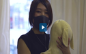 Video: Kỳ lạ phòng khám cho thú nhồi bông ở Nhật Bản