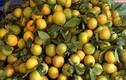 Người bán tiết lộ vì sao Cam Vinh chỉ 5 nghìn đồng/kg