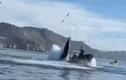 Video: Cá voi há miệng đớp ngang thuyền
