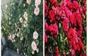 Trang trí nhà đẹp với các loài hoa tươi dễ trồng