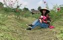 8x xứ Nghệ bỏ phố về quê trồng hoa hồng, thu nửa tỷ đồng mỗi năm