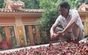 Lão nông thu về hàng tỷ đồng mỗi vụ khi trồng loại cây này