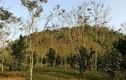 Kho báu nghìn tỷ dưới thung lũng của lão nông Tuyên Quang