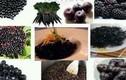 Những thực phẩm màu đen tốt như nhân sâm nhà nào cũng có