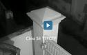 Video : Hai tên trộm trèo qua tường lấy cắp chậu cảnh