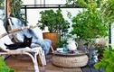 3 nguyên tắc vàng khi trồng cây phong thủy ở ban công chung cư