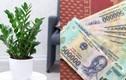 4 loại cây phong thủy nghe tên đã thấy giàu