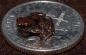 Loài động vật nào có xương sống nhỏ nhất thế giới?