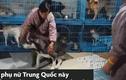 Video: Người phụ nữ sống với hơn 1.300 chú chó