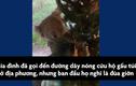 Video: Gấu túi lẻn vào núp trong cây thông Noel ở Australia