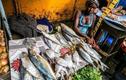 Khu chợ bán hải sản rẻ hơn rau con gì cũng có