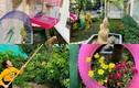 Khu vườn trong biệt thự triệu đô của ca sĩ Vy Oanh
