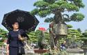 Cây cảnh Chuyện tình cây và cối thế độc lạ thu hút khách quan