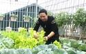 Ông bố Hà Nội chi gần trăm triệu để trồng rau trên sân thượng